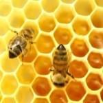 пчелиный воск для крема для обуви